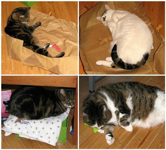 Gallerie Katzen 2