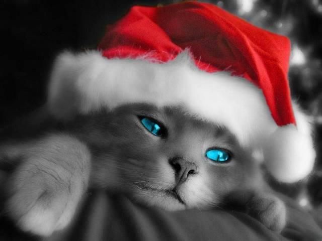 Weihnachten 14
