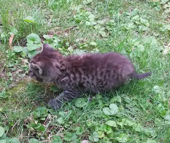 Babykatze 4