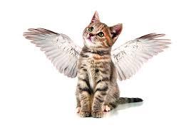Katze mit Flügeln